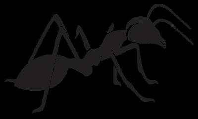 Morning ants